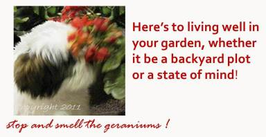 Stop and Smell the Geraniums