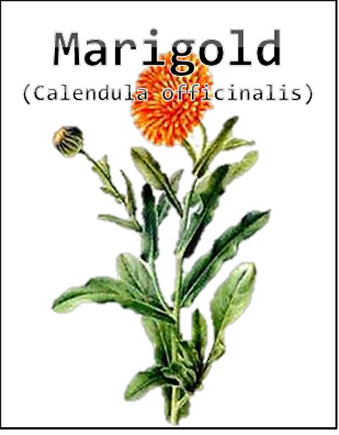 Free Printable Merry Marigold Seed Packet